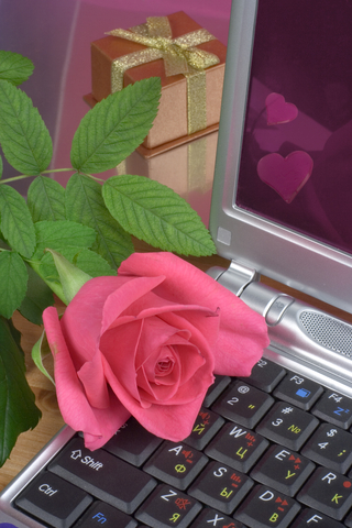 Rose with Laptop